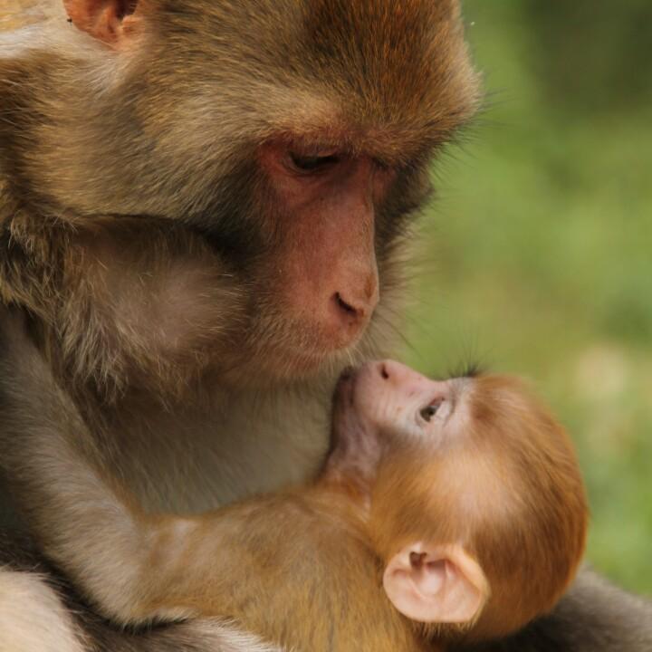 中国猴山五龙口风景区