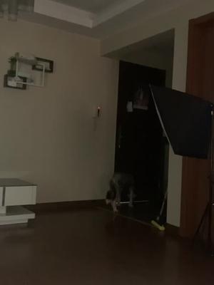 抖音迪宝包的视频